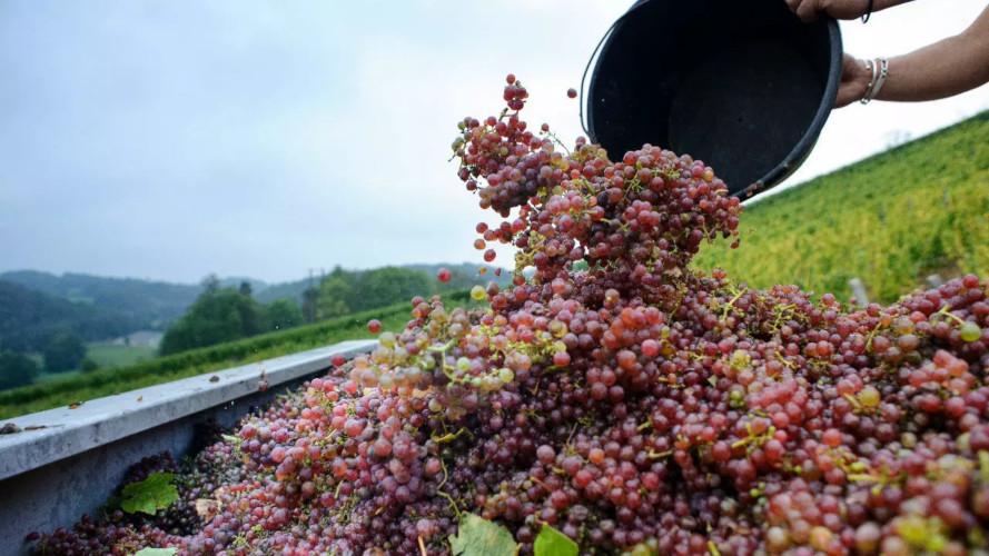 Settore vinicolo francese